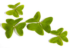 Four Bright Green Clovers on White Background Stock Images