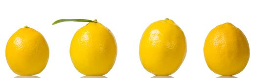 Four bright yellow lemons stand in row isolated on white. Background Stock Photography