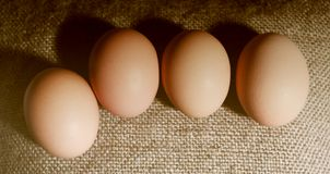 Four brown eggs. Stock Image