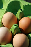 Four Brown Eggs. Detail image of our brown organic eggs in a green recycled egg carton Royalty Free Stock Photography
