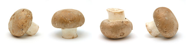 Four brown mushrooms Royalty Free Stock Image