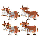 Four brown and spotted cows chewing grass Royalty Free Stock Photo