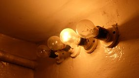 Four bulbs, one of which lights up. royalty free stock image