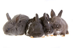 Four bunny Stock Image