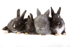Four bunny Royalty Free Stock Images