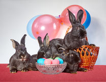 Four bunnys and Easter eggs Royalty Free Stock Photos