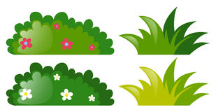 Four bushes with and without flowers Royalty Free Stock Images