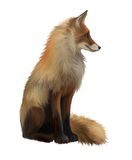 Adult fox , Isolated realistic illustration on whi Royalty Free Stock Photo