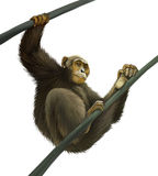 Chimpanzee climbing on liana. Isolated Illustartio. N on white background Stock Photography