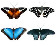 Four butterflies Stock Photos