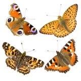 Four butterflies on white Royalty Free Stock Photo