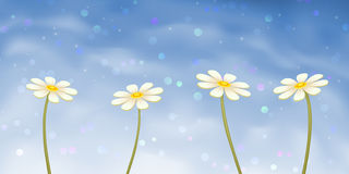 Four camomiles on blue sky background Vector Illustration