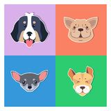 Four Canine Heads of Pedigreed Dogs Doggie Concept. Four canine heads of pedigreed dogs set on colored background. Vector illustration of heavy Bernese Mountain vector illustration