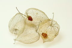 Four Cape gooseberry peels Royalty Free Stock Images
