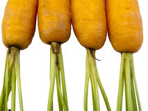 Four Carrots Stock Images