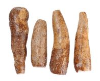 Four cassava Stock Image