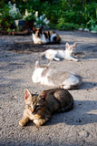 Four cats in a garden Stock Images