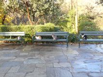Cats on Benches. Four cats lined up on benches in National Gardens, Athens Stock Photography