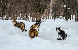 Four cats in the snow Stock Images
