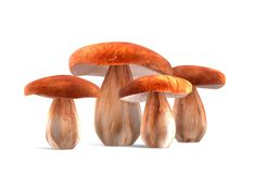 Four ceps mushrooms isolated on white 3d illustration Stock Photos