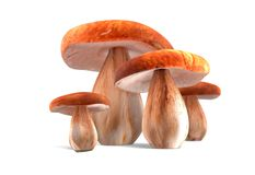 Four ceps mushrooms isolated on white 3d illustration Royalty Free Stock Photos