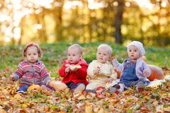 Four cheerful little baby sitting on yellow autumn Royalty Free Stock Image