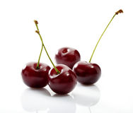 Four cherries close-up on white background Stock Image