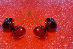 Four cherries on a red water drop background. For designers, web design templates royalty free stock photos