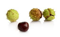 Four chestnuts in line with individual isolated on white background Stock Images