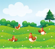 Four chickens at the hills Royalty Free Stock Images