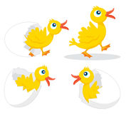 Four chicks. Illustration of four chicks hatching Stock Photo