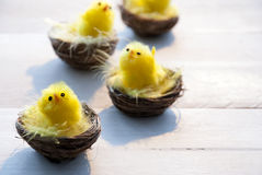 Four Chicks In Easter Baskets With Yellow Feathers Stock Photography
