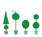Four Clipped Topiaries in a Row Stock Photos
