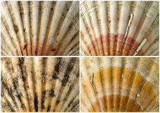 Four Close up of Seashells Royalty Free Stock Photo