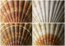 Four Close up of Seashells Royalty Free Stock Image