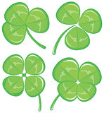 Four clover Stock Image