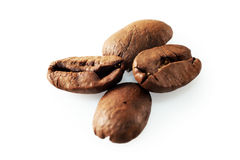 Four coffee beans on white background. Four roasted coffee beans on white background stock image