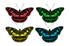 Four color of Blackvein Sergeant butterfly Royalty Free Stock Images