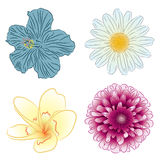 Four color flowers Royalty Free Stock Photos