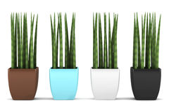 Four color pots decorative plants isolated Royalty Free Stock Photo