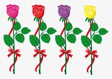 Four color  roses with  red bow and ribbon Royalty Free Stock Photography
