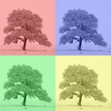 The four-color tree. The colors of nature. royalty free stock photography