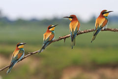 Four colored birds Stock Images