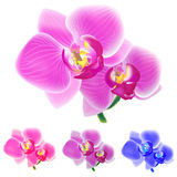 Four colored orchids isolated on white background. Four colored orchids isolated on white background Stock Illustration