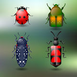 Four colorful beetles. Green background, vector Stock Photo