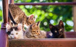 Four colorful kittens on a natural background. Summer shot. royalty free stock photos