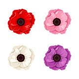 Four colorful poppies. Vector illustration. Stock Image