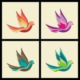 Four colorfull pigeon bird ilustration Stock Photo