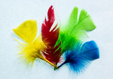 Four Colors Feathers Stock Image