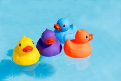 Four colourful rubber ducks, a family of ducks. Yellow, blue, purple and orange, swimming in the water in a paddling pool stock image